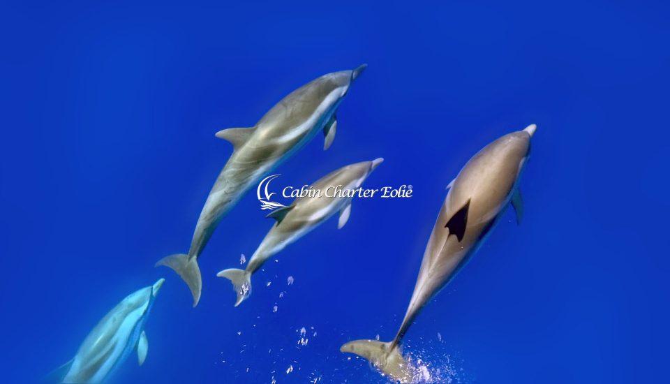 Alicudi - Catamarano - Imbarco Individuale - Cabin Charter Eolie